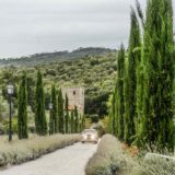 Exclusive weddings villa Italy Wedding ,main cypresses tree driveway.